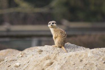 Colorado, Zoo, www.anitaaufreisen.at