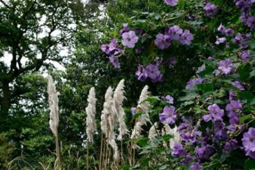 Gartenreise nach Wisley, Südengland, Foto Anita Arneitz