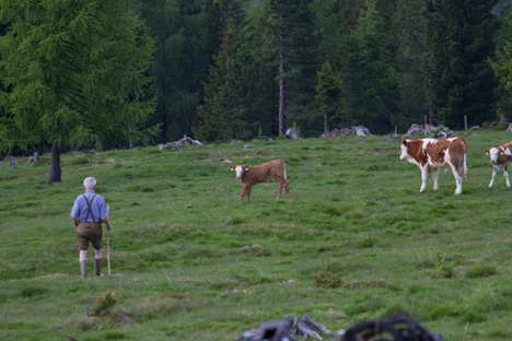 Kühe vom Biohiasl_Foto Matthias Eichinger (7)