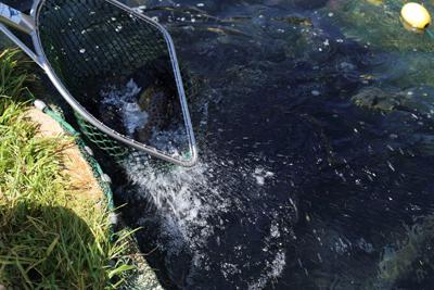 Fischerei Payr_Fotograf Anita Arneitz (1)