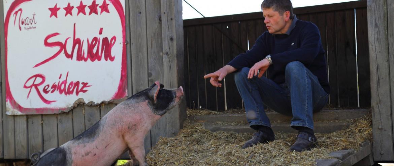 Josef Nuart mit Schweinen (3)