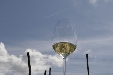 Wein aus Kroatien, Istrien