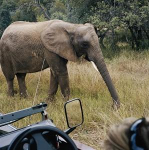 Auf_Safari