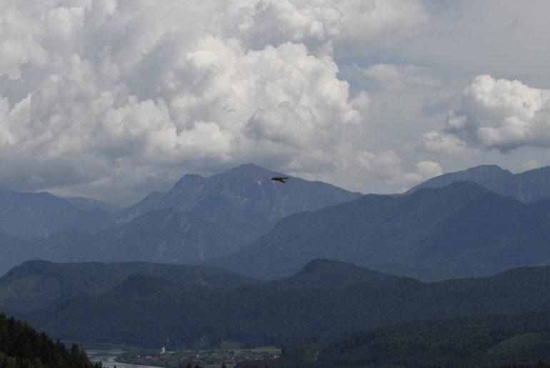 Adler auf Burg Landskron, Foto Matthias Eichinger