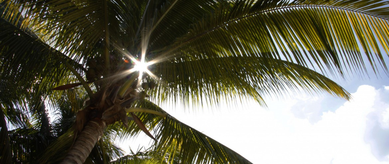 Sonne, Palme, Jamaika, Foto Matthias Eichinger
