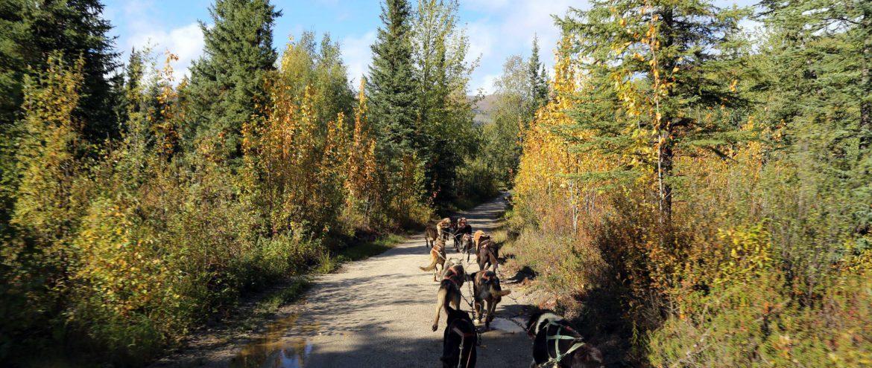 Alaska, Chena River, Fairbanks, Anita Arneitz