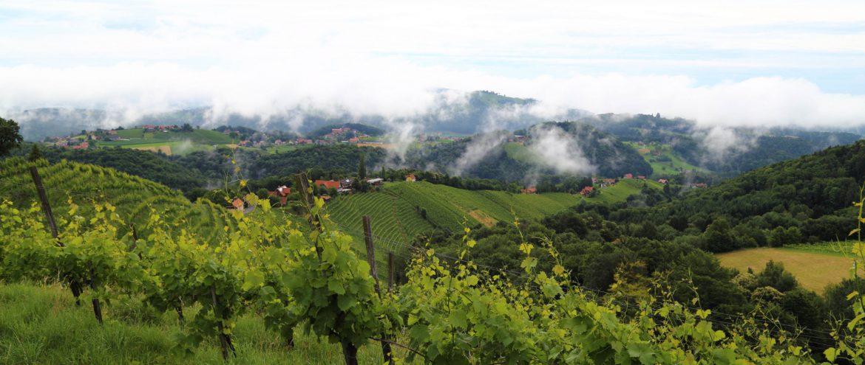 Bioweingut Warga-Hack, Sulmtal-Sausal, Steiermark, www.anitaaufreisen.at