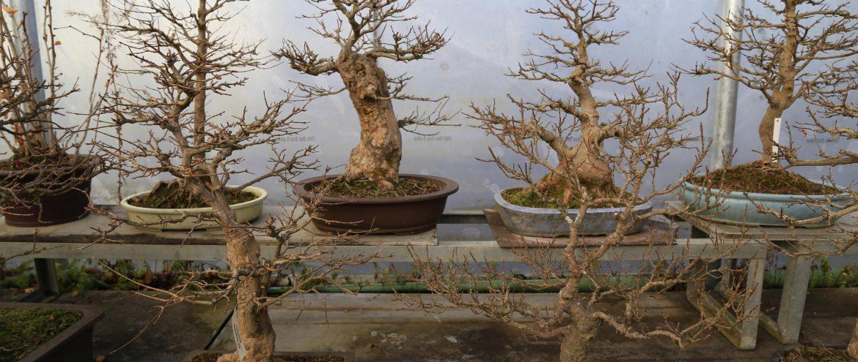 Bonsai-Garten, Bonsai-Museum Seeboden, Millstätter See, Foto Anita Arneitz & Matthias Eichinger, www.anitaaufreisen.at