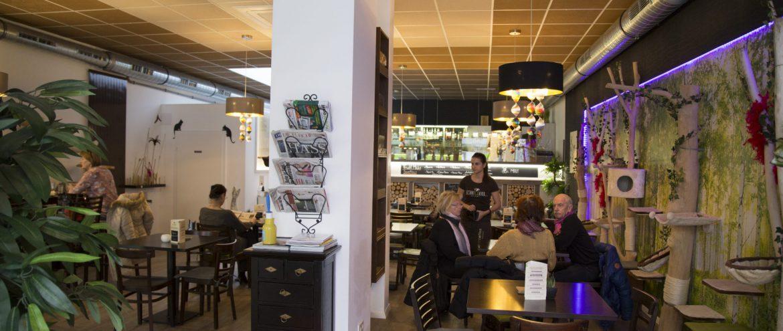 Katzencafé Klagenfurt, www.anitaaufreisen.at