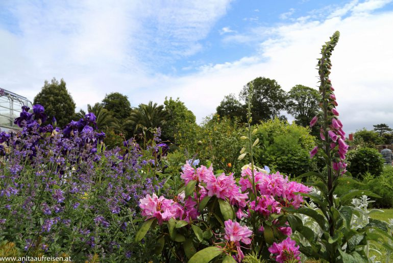 Torre Abbey, Torquay, Agatha Christies Giftpflanzen, England, www.anitaaufreisen.at