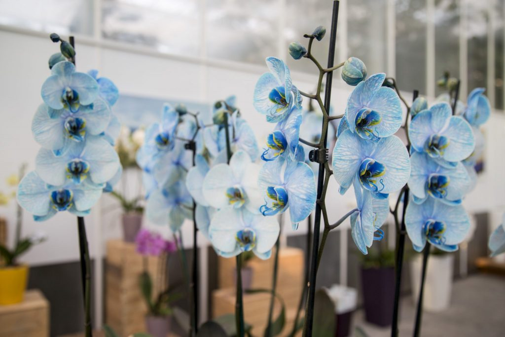 Tropischer Garten Slowenien, Ocean Orchids, Prekmurje, www.anitaaufreisen.at