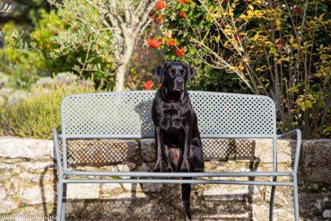 Urlaub mit Hund in der Toskana, Montebuoni, www.anitaaufreisen.at