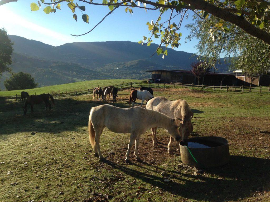 Reiturlaub in Italien, Toskana, Foto Karin Schafler, www.anitaaufreisen.at