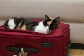 Koffer packen leicht gemacht, Lifehack, Foto Anita Arneitz, www.anitaaufreisen.at