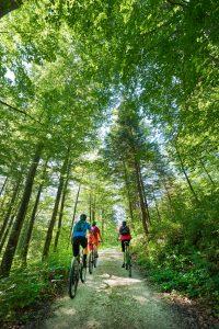 Roška Trail in Kočevsko, Slowenien, Wandertipp Hornwald, Reiseblog www.anitaaufreisen.at, Foto TVB Slowenien