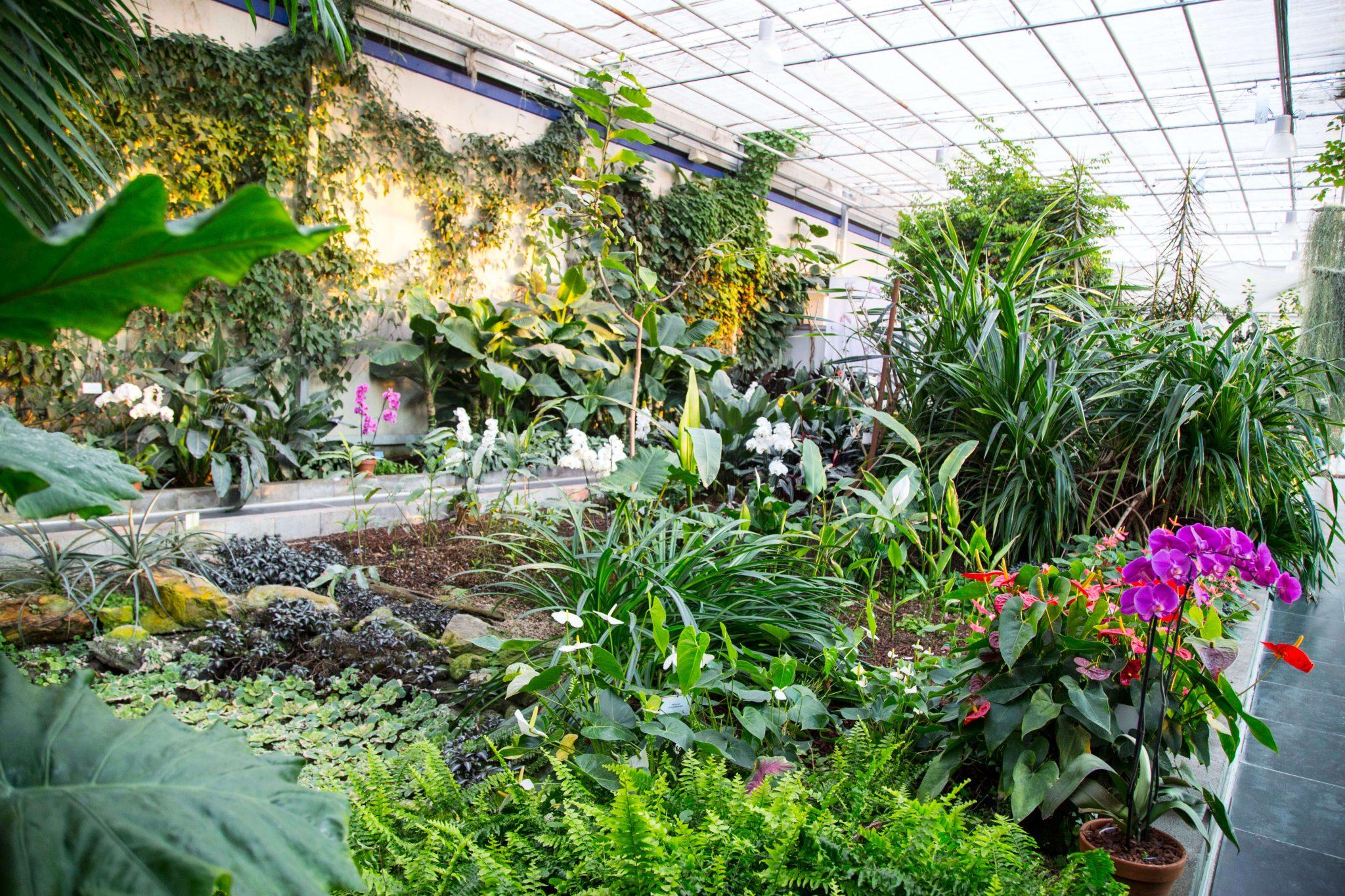 Blaue Orchideen, Ocean Orchids, Orchideen, Slowenien, Dobrovnik, Foto Anita Arneitz, Reiseblog www.anitaaufreisen.at