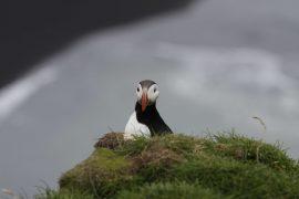 Urlaubstipps Island, Foto Anita Arneitz