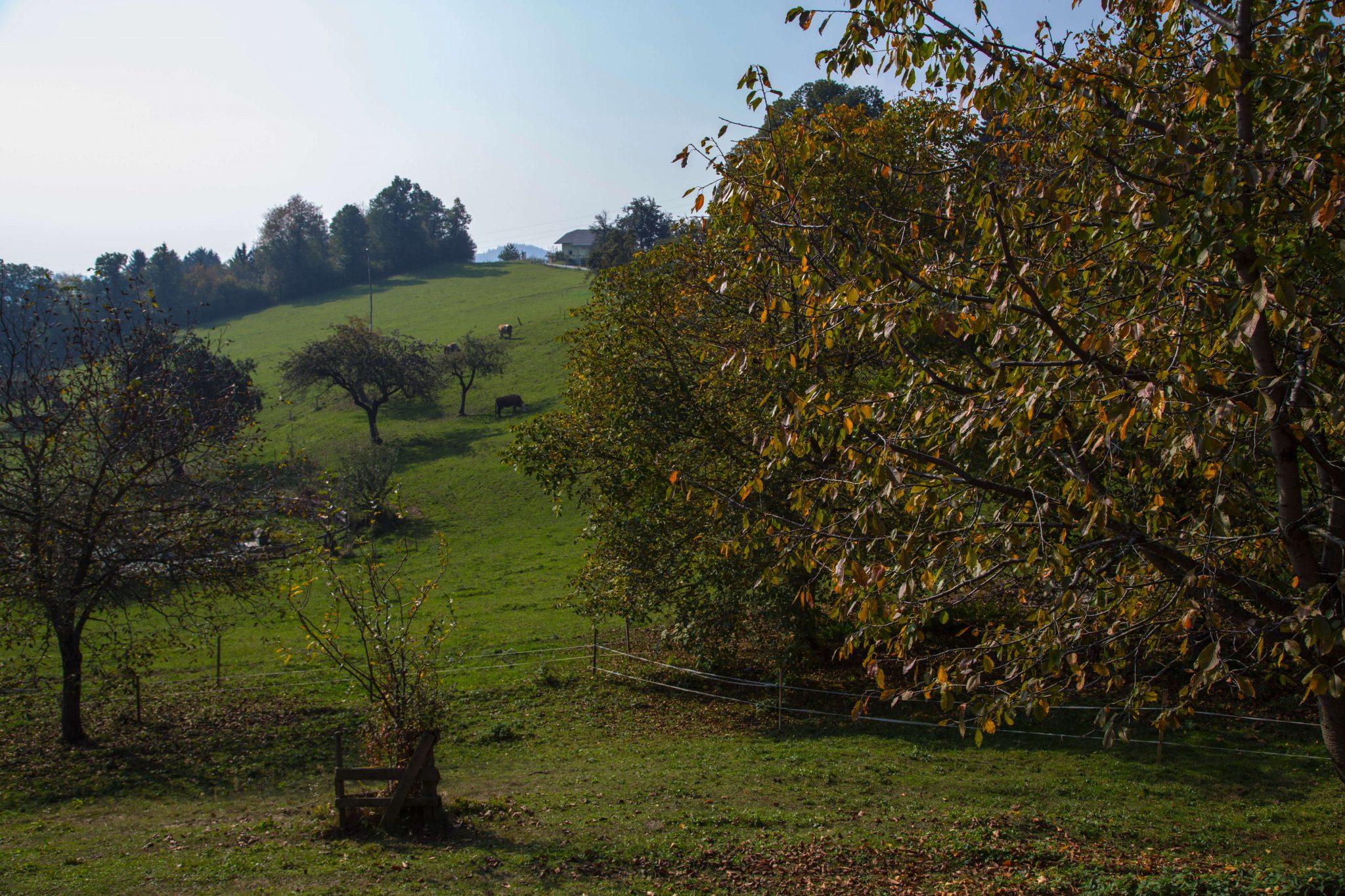 Urlaub am Bauernhof in Slowenien, Bauernhof Kovacnik, Familie Stern, Planica, Fram, Race, Wandertipps, Radfahren, Pohorje, Frühstück, Restaurant, Foto Anita Arneitz, Reiseblog www.anitaaufreisen.at