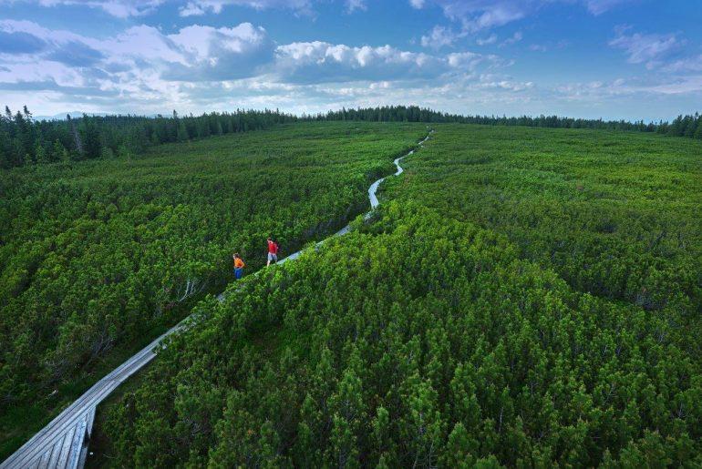 Beinahe unberührte Natur um die Seen von Lovrenc © www.slovenia.info/ Tomo Jeseničnik