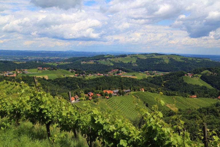 Weingärten im Sausal