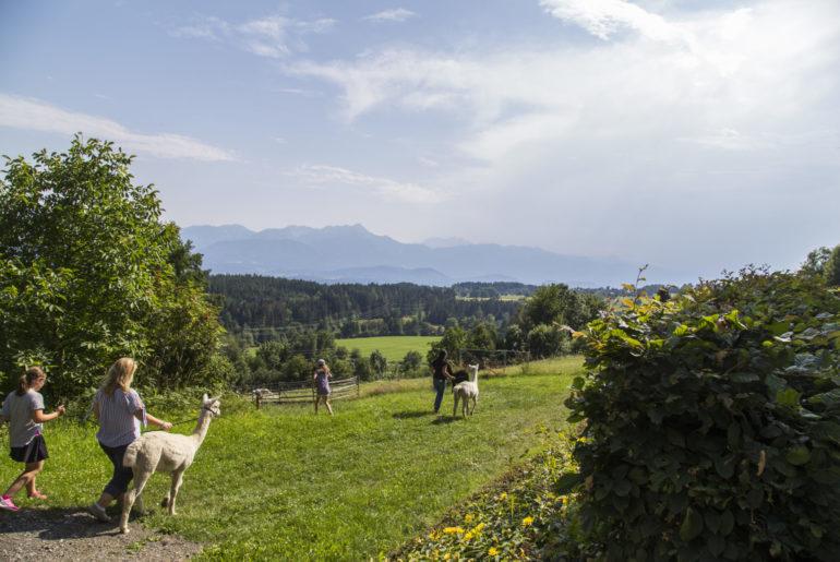 Wandern mit Alpaka