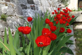 Blumenfrühling in Friaul