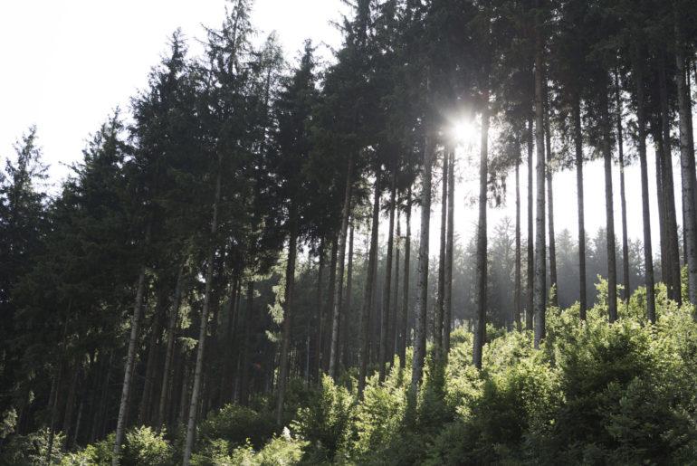 Wald im Großarltal