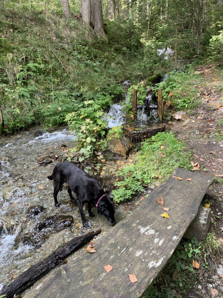 Wandern in Kärnten mit Hund